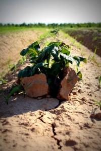 potato power! | CC BY-SA 2.0 | Martin Fisch